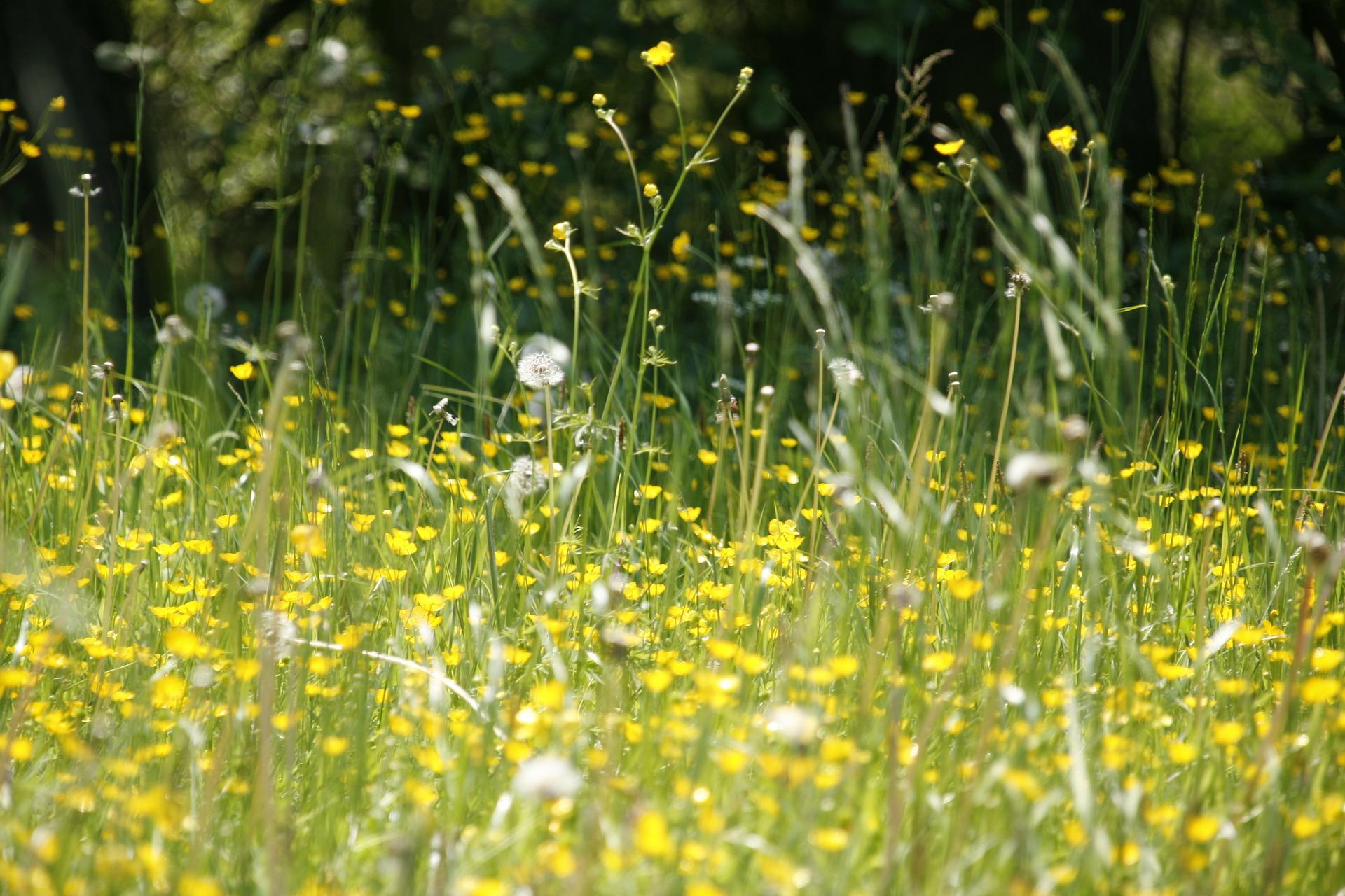 Wenn die Nase läuft und die Augen brennen ist wieder Frühling und damit der Beginn der Heuschnupfen-Saison